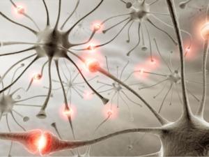 Der synaptische Spalt im Gehirn